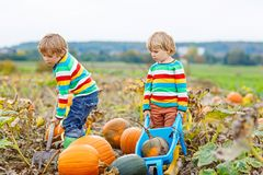 Two little kids boys picking pumpkins on Halloween or Thanksgiving pumpkin patch. Two little kids boys picking pumpkins on Halloween pumpkin patch. Children Royalty Free Stock Photos