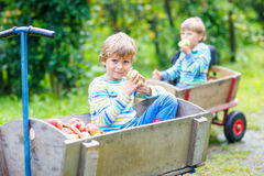 Two little kids boys picking red apples on farm autumn Royalty Free Stock Images