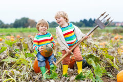 Two little kids boys sitting on big pumpkins on patch Stock Photography