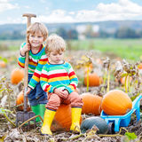 Two little kids boys sitting on big pumpkins on patch Royalty Free Stock Photography