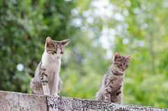 Two little kitten. On garage in her nature environment Royalty Free Stock Images