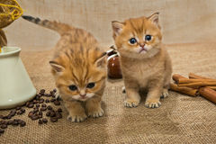 Two little kitten and ingredients for coffee Royalty Free Stock Photos