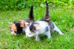 Two little kittens Stock Photography