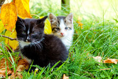 Two little kittens Stock Photos