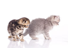 Two little kittens Royalty Free Stock Photos