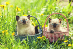 Two little kittens royalty free stock photo
