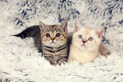 Two little kittens on blanket Stock Photo