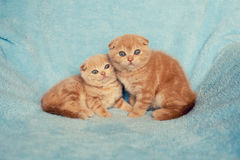Two little kittens Royalty Free Stock Photography