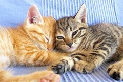 Two little kittens Stock Images