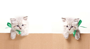 Two little kittens look out from box Stock Photography
