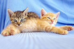 Two little kittens playing Stock Images