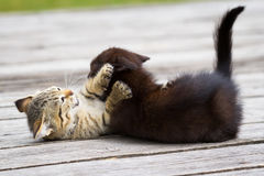 Two little kittens playing Stock Photo