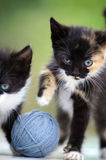 Two Little Kittens Stock Image