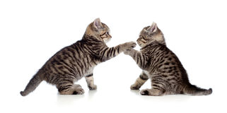 Two little kittens playing together Stock Image