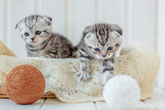 Two little kittens playing with yarn, wool balls. royalty free stock images