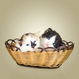 Two little kittens sitting in basket Stock Photography