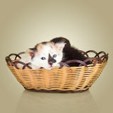 Two little kittens sitting in basket Stock Images