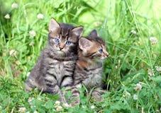 Two little kittens Stock Photos