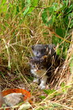 Two Little kittens in summer grass Royalty Free Stock Photo