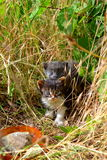 Two Little kittens in summer grass. Cute kittens newborn  among the summer grass in daylight Royalty Free Stock Images