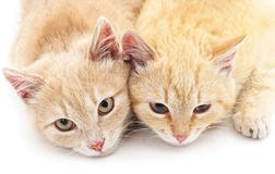 Two little kittens. Two little kittens isolated on a white background Royalty Free Stock Photography