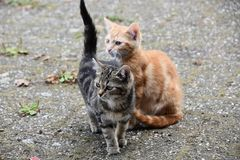 Two little kittens are waiting for their mom Stock Photography