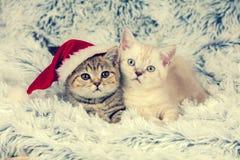 Two little kittens. Wearing Santa hat lying on fluffy blanket Royalty Free Stock Photos