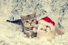 Two little kittens. Wearing Santa hat lying on fluffy blanket Stock Photography