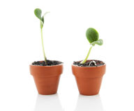 Two little new plant in pot, new life Royalty Free Stock Photos