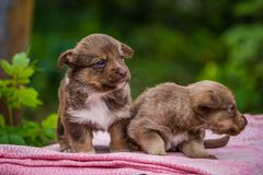 First steps of little puppies Stock Photos