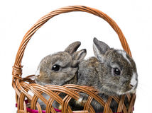 Two little rabbits Royalty Free Stock Image