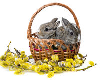 Two little rabbits in a basket Royalty Free Stock Photos