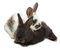 Two little rabbits Royalty Free Stock Photography