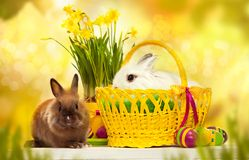 Two little rabbits among Easter eggs in basket. Greeting card with bunnys Stock Images