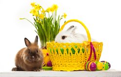 Two little rabbits among Easter eggs in basket Stock Image