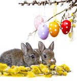 Two little rabbits and easter eggs Royalty Free Stock Image