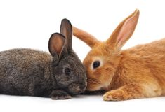Two little rabbits. Two little rabbits on a white background Royalty Free Stock Photos