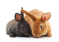 Two little rabbits. royalty free stock image