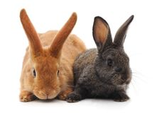 Two little rabbits. royalty free stock photos