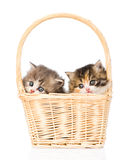 Two little scottish kittens sitting in basket  on white Stock Image