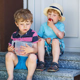 Two little sibling boys eating fresh strawberries Royalty Free Stock Photo