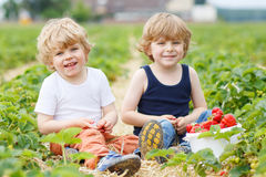 Two little sibling boys having fun on strawberry farm Stock Photo