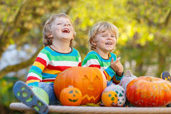 Two little sibling boys making jack-o-lantern for halloween in a Stock Photo