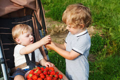 Two little sibling boys on strawberry farm. Stock Photo