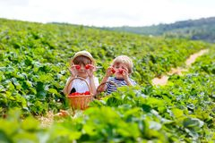Two little sibling boys on strawberry farm in summer Stock Images