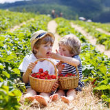 Two little sibling boys on strawberry farm in summer Royalty Free Stock Images