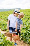 Two little sibling boys on strawberry farm in summer. Two little sibling kids boys having fun on strawberry farm in summer. Children, cute twins eating healthy royalty free stock photo