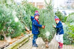 Two little kid boys buying christmas tree in outdoor shop stock photos