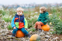 Two little siblings sitting on big pumpkin on cold autumn day Stock Image
