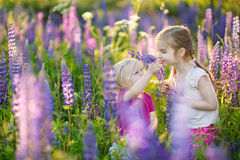 Two little sisters in blooming lupine field Royalty Free Stock Photos